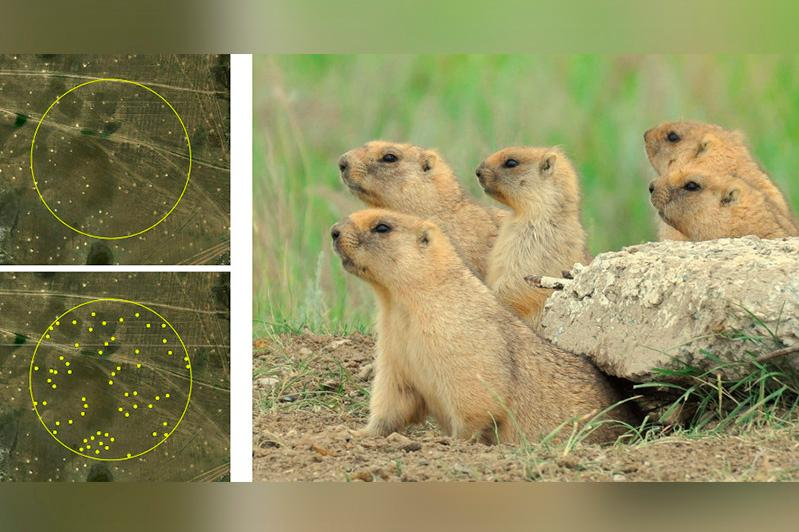90% всей мировой популяции сурка-байбака обитает в степях Казахстана - ученые