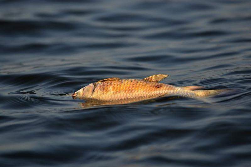 В Атырау проверят качество воды на месте гибели рыбы в реке Урал