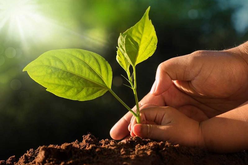 联合国宣布2020年为国际植物健康年