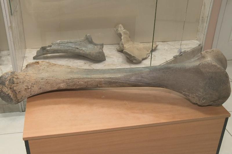 27 kg mammoth bone on exhibit at Atyrau museum