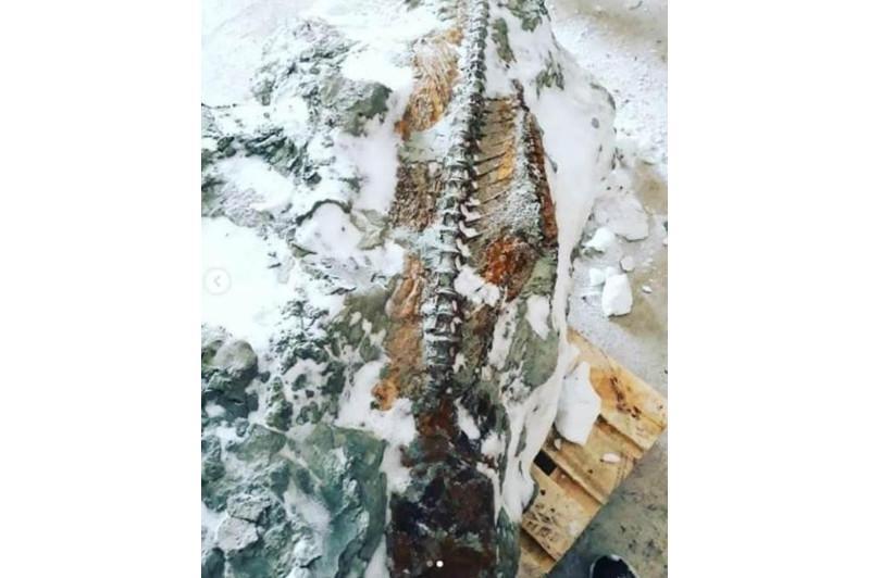 Полный скелет жившей 20 млн лет назад рыбы нашли в Костанайской области