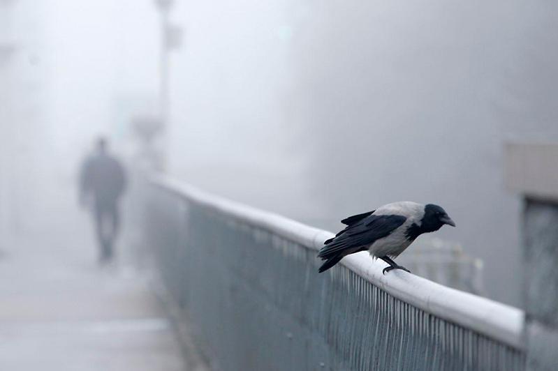 Туман и гололед: штормовое предупреждение в трех регионах Казахстана