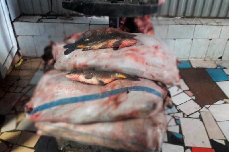 Более тонны незаконно перевозимой рыбы изъяли у жителя Уральска