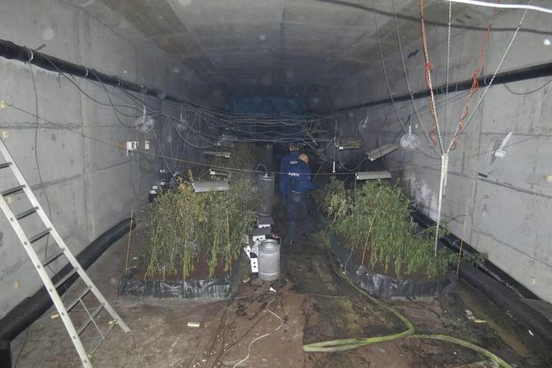 Плантацию конопли обнаружили внутри моста в Бельгии