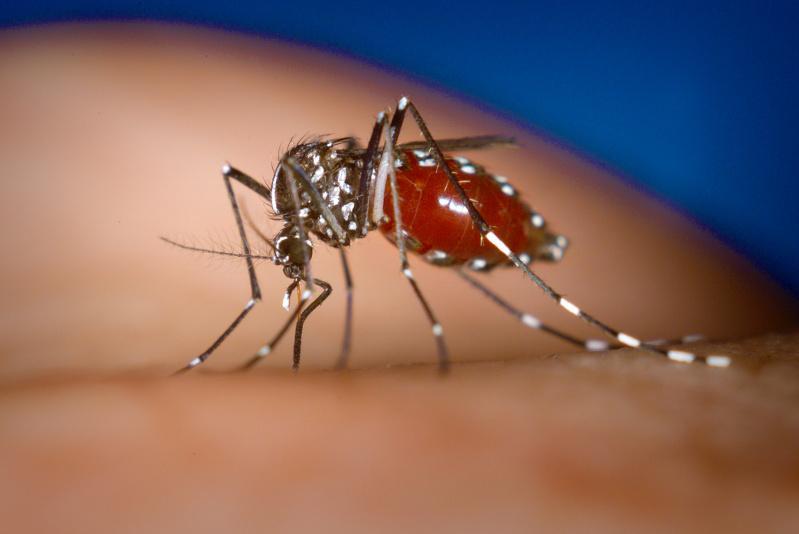 Australian scientists make breakthrough on preventing spread of dengue fever