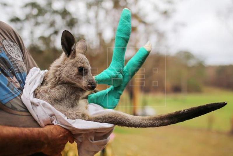 Australia bushfires threaten the future of 327 plant, animal species