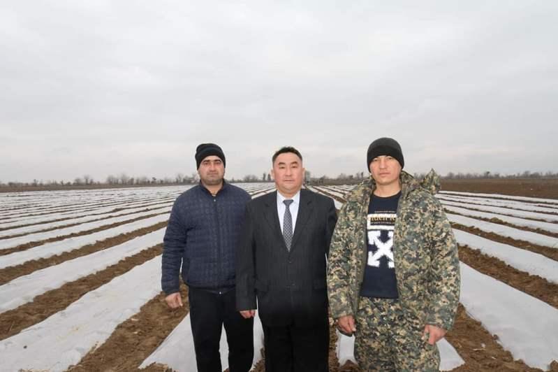 Túrkistan oblysynyń dıqanshylary qyryqqabat egýdi bastady