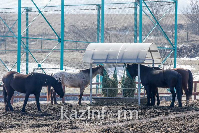 У жительницы Нур-Султана украли и зарезали породистых лошадей