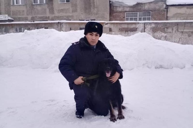 Служебный пес помог найти украденную медвежью шкуру в Усть-Каменогорске