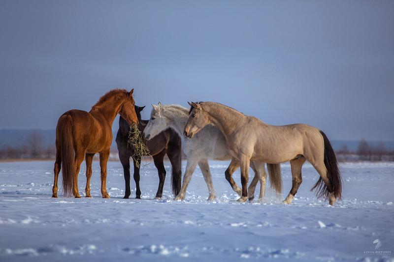 Угнанный в районе табун лошадей обнаружили в убойном цехе в Атырау