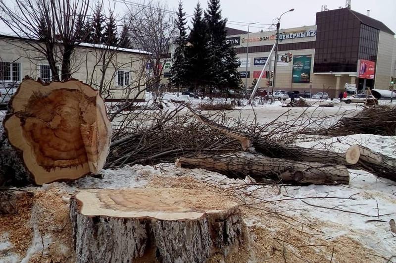 Зачем вырубают деревья на улицах – объяснил в соцсетях аким Петропавловска
