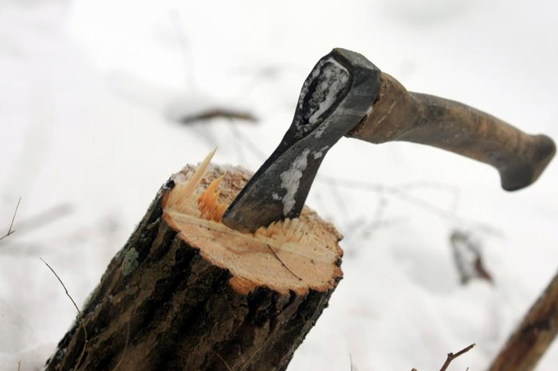 Прокуратура остановила вырубку деревьев в Петропавловске