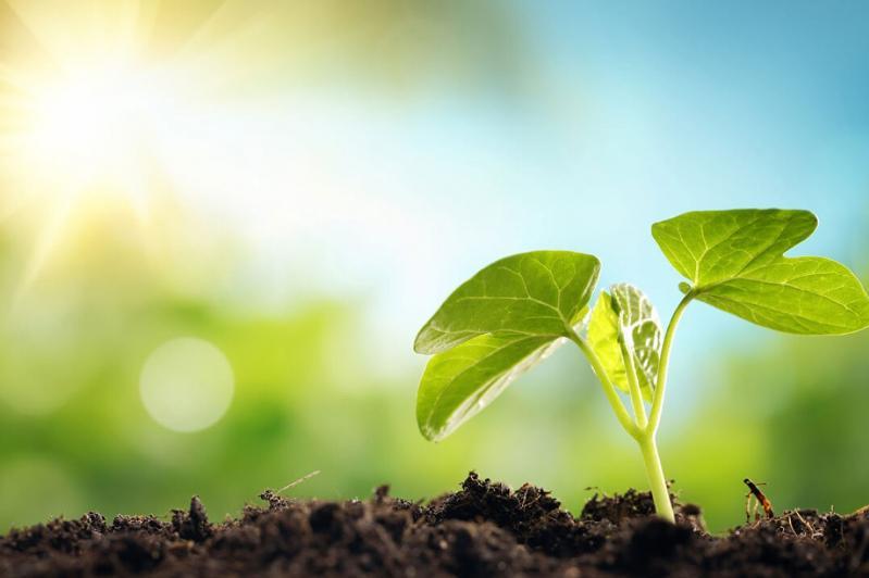 Главные принципы нового Экологического кодекса назвал Магзум Мирзагалиев