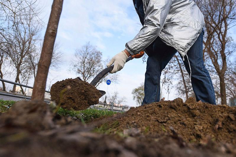 Алматыда 200 мыңға жуық ағаш отырғызу жоспарланды