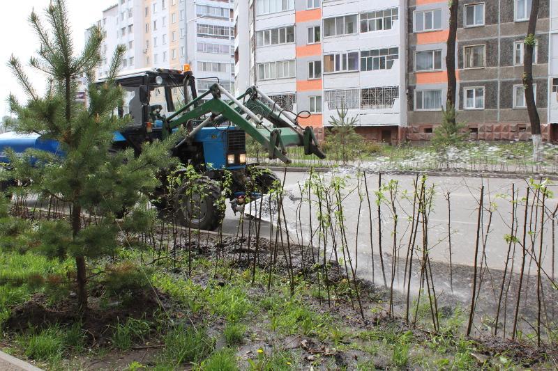 Барбарис и рябины высадят на улицах Петропавловска
