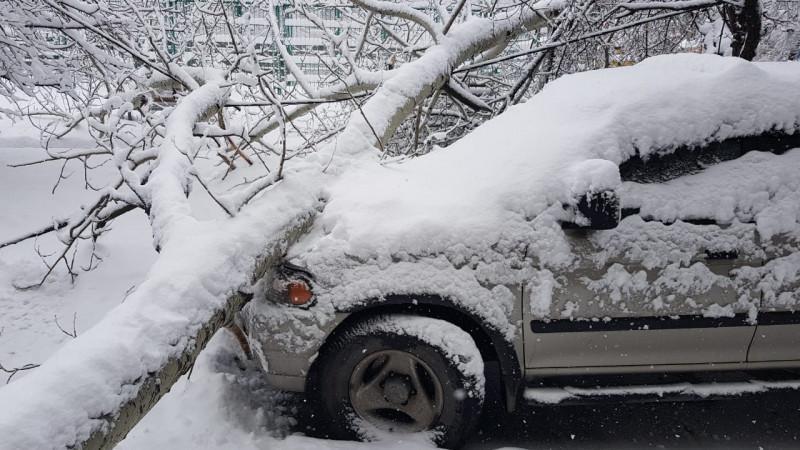 В Алматы упавшая под тяжестью снега ветка травмировала человека