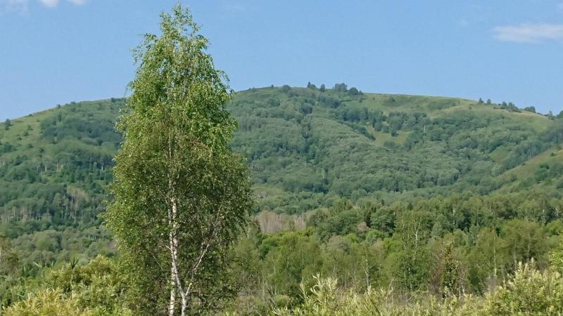 Павлодар облысында ағаш отырғызу жобасы басталады