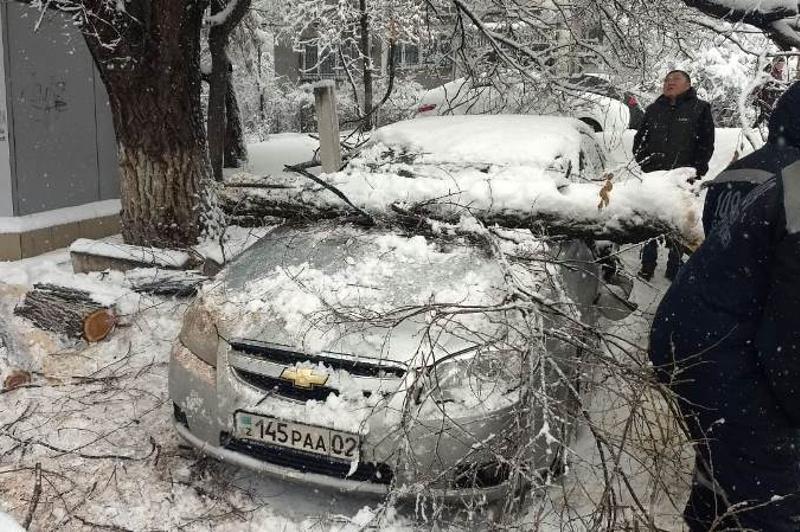 Более 50 автомашин повредили упавшие под тяжестью снега деревья в Алматы