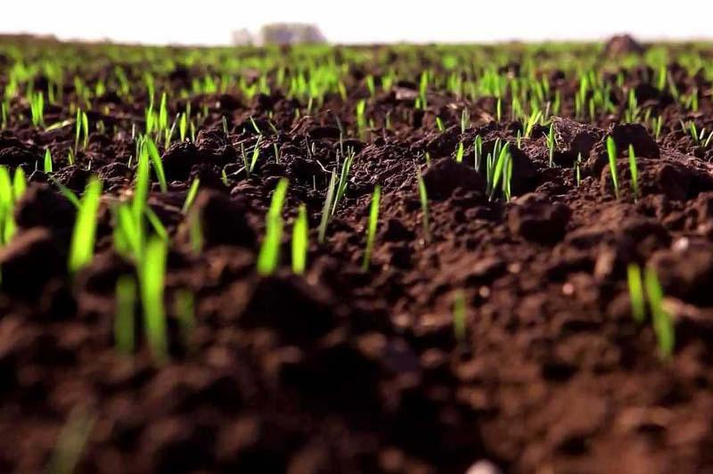 Қазақстанда биыл 22,5 млн га аумаққа ауыл шаруашылығы дақылдары егіледі