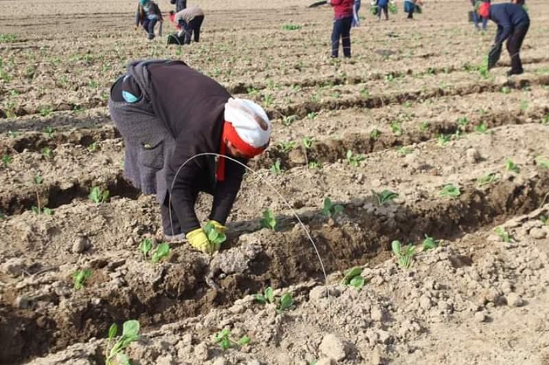 78,5 тысяч га планируют засеять в Жетысайском районе Туркестанской области