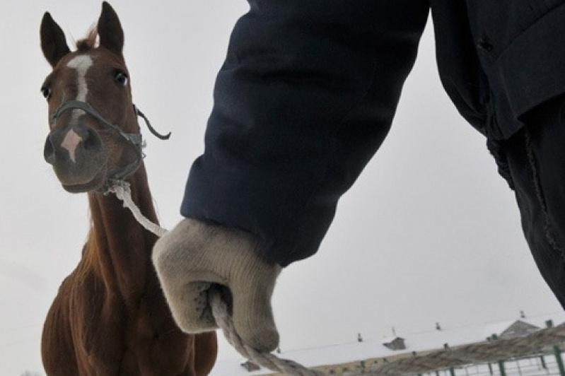 Более 100 голов скота похитили жители Восточного Казахстана