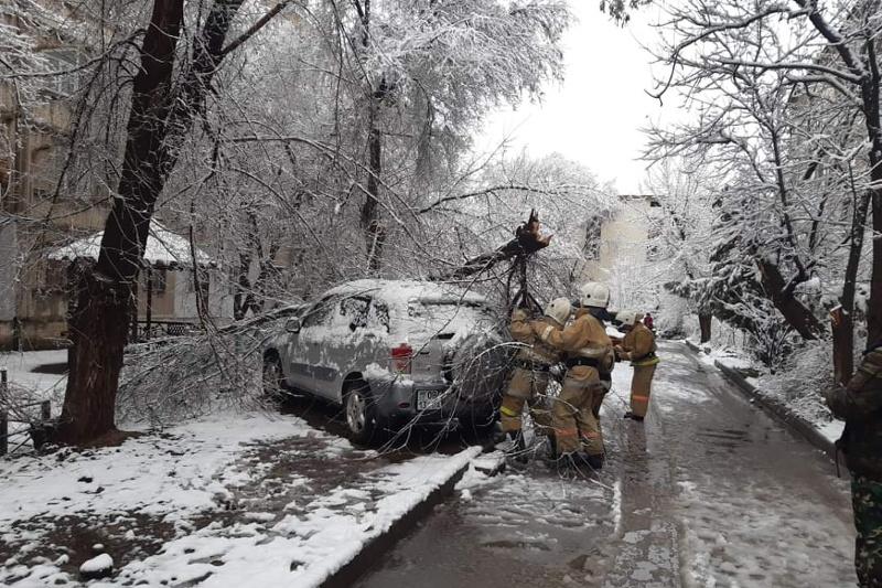 Сильный ливень в Шымкенте: затоплены дворы, повалены деревья