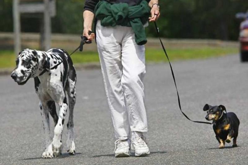 Места для выгула собак оборудуют в Алматы