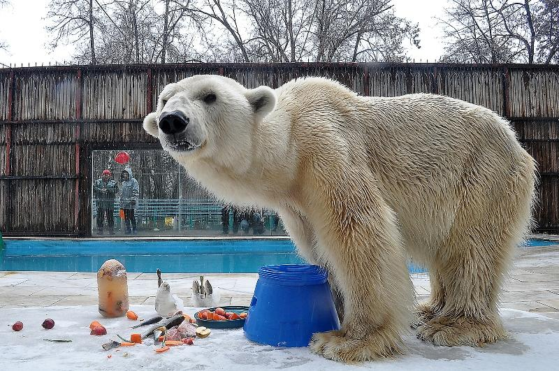 Международный день белого медведя отмечают в зоопарке Алматы