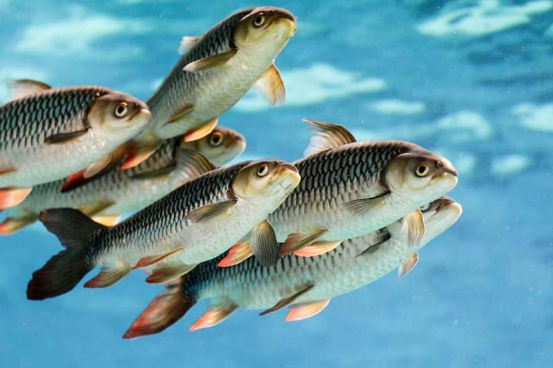 Программу развития рыбного хозяйства разработают в Казахстане