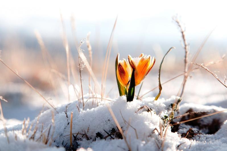 Какой будет погода в первый день весны в Казахстане