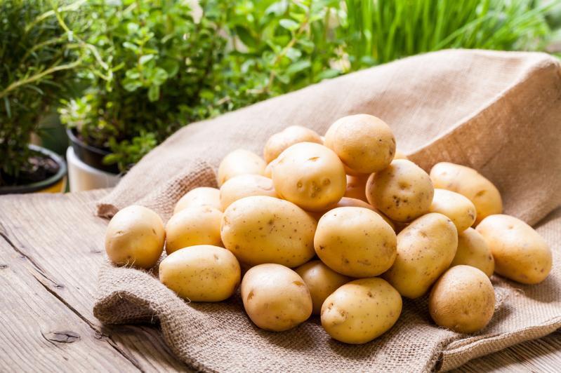 Обеспечить качественными семенами просят картофелеводы Жамбылской области