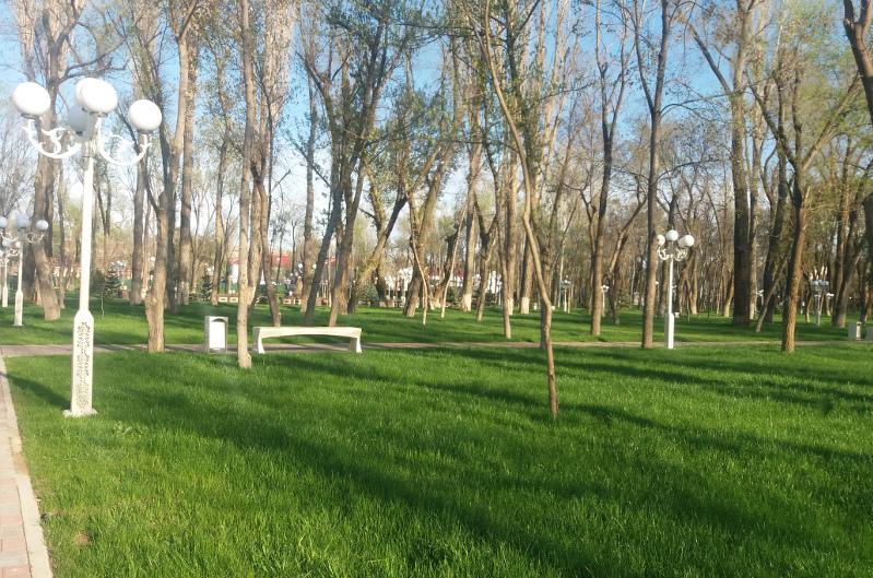 Более 120 тысяч саженцев высадят в Жамбылской области