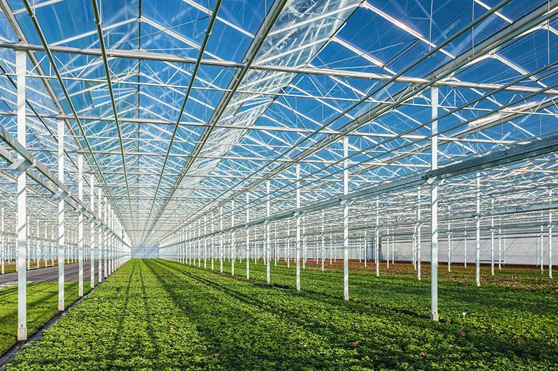 Қазақстанда жылыжай алаңдары 1,7 мың гектарға дейін ұлғайтылады