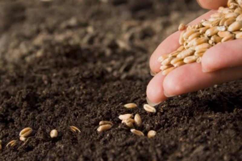 Сапархан Омаров попросил обратить особое внимание на качественный показатель семян при посевной