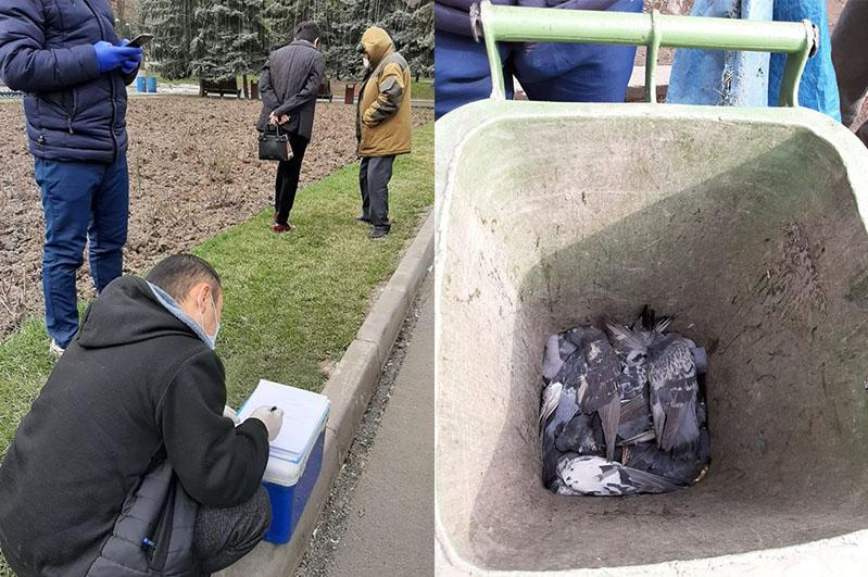 Названа возможная причина гибели голубей в Алматы
