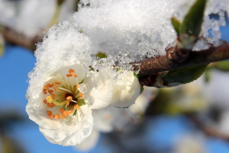 Солнечная и теплая погода ожидается в Казахстане 28-30 марта