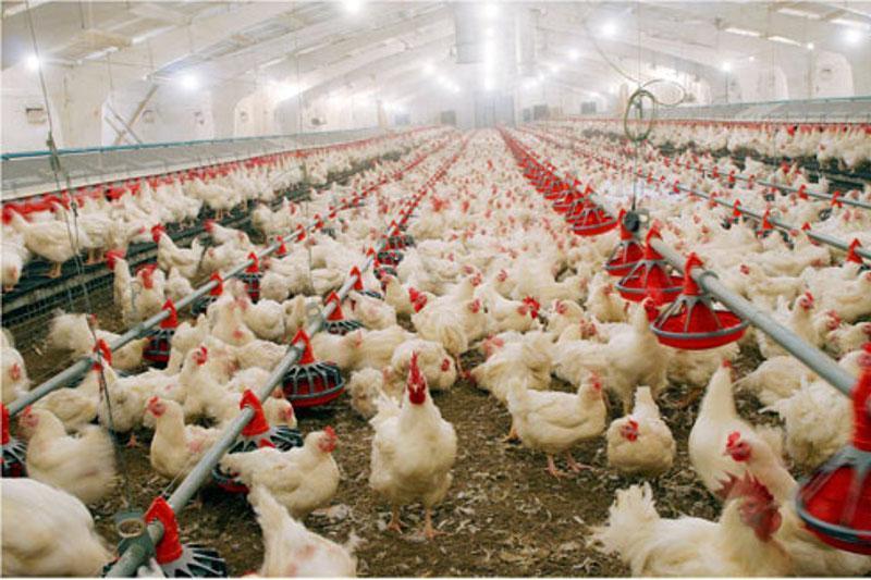 На птицефабрике Усть-Каменогорска сокращений нет, заработная плата выплачивается своевременно – Ришат Раисов