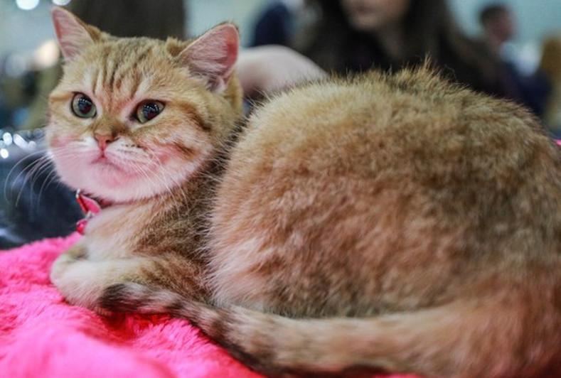 Подтвержден случай заражения кошки коронавирусом в Бельгии