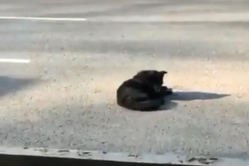 Видео с «мертвыми» собаками в центре Алматы прокомментировали в акимате