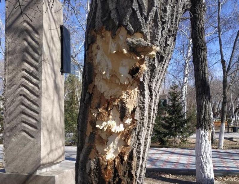 Неизвестные повредили деревья в павлодарском парке