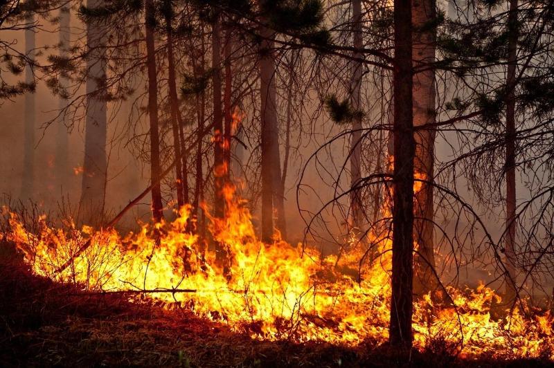 19 человек погибли при тушении лесного пожара в Китае