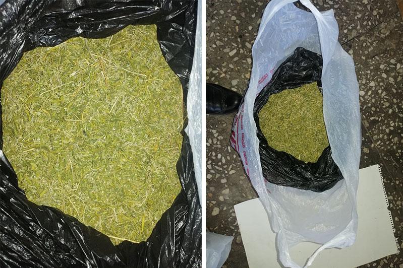 Тараздық тұрғыннан 10 келіден астам марихуана тәркіленді