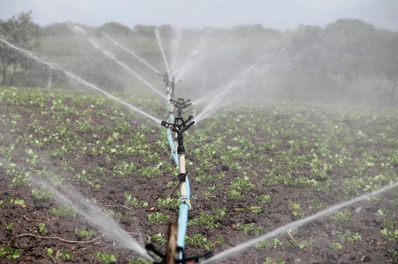 Жамбылские аграрии получат достаточно поливной воды из Кыргызстана в вегетационный период