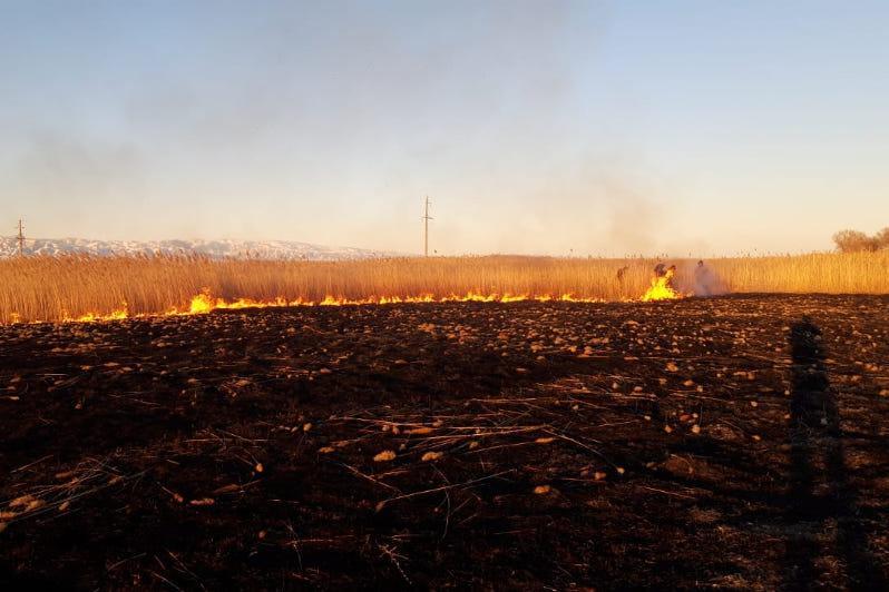 Степной пожар в пяти км от леса потушили в ВКО