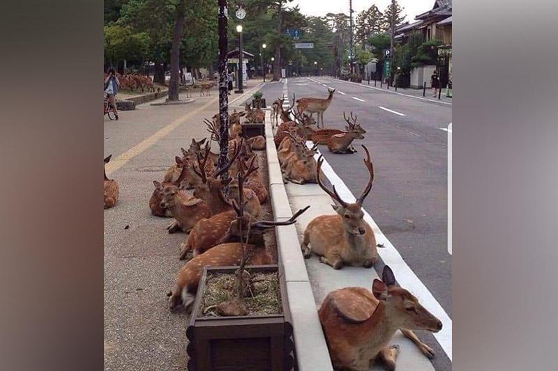 Опустевшие от вируса города захватили дикие животные