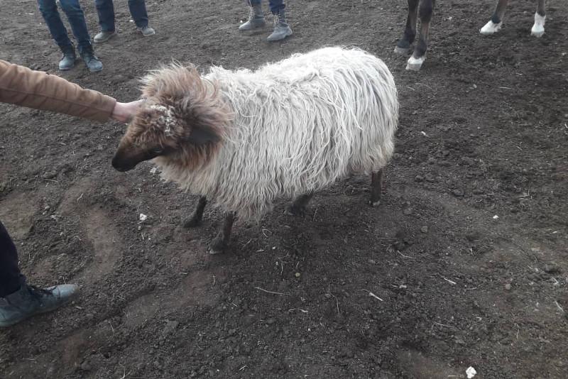 Әкесінің шаруа қожалығынан мал ұрлап істі болды - Алматы облысы