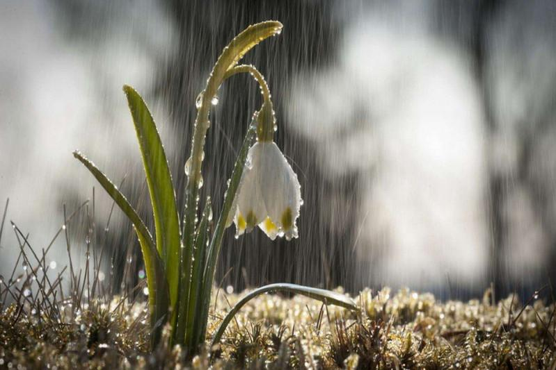 Қазгидромет: Сәуірдің 10-ы күнгі ауа райы болжамы