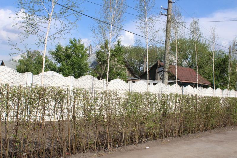 Какой будет историческая улица в Петропавловске – рассказал аким СКО