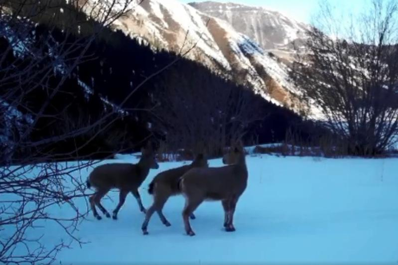 Bear, leopard and fox caught on camera in mountains near Almaty