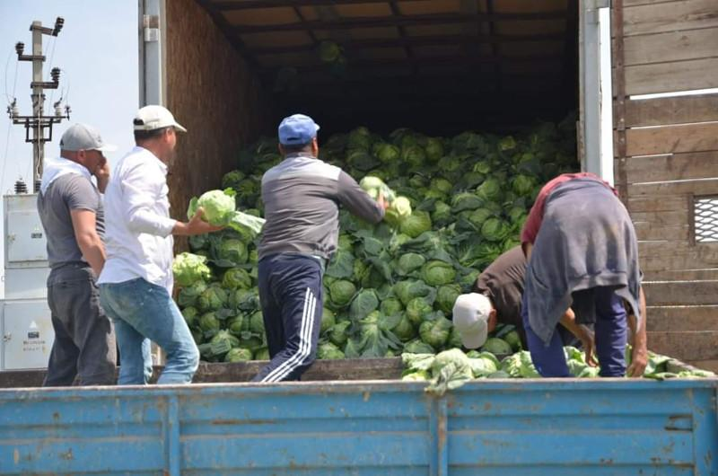 Мақтаараллик тадбиркор гуманитар ёрдам олиб келганларга 600 тонна карам бериб юборди